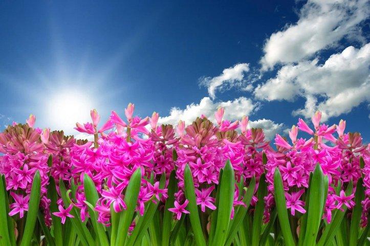 Essential-Oils-for-Spring